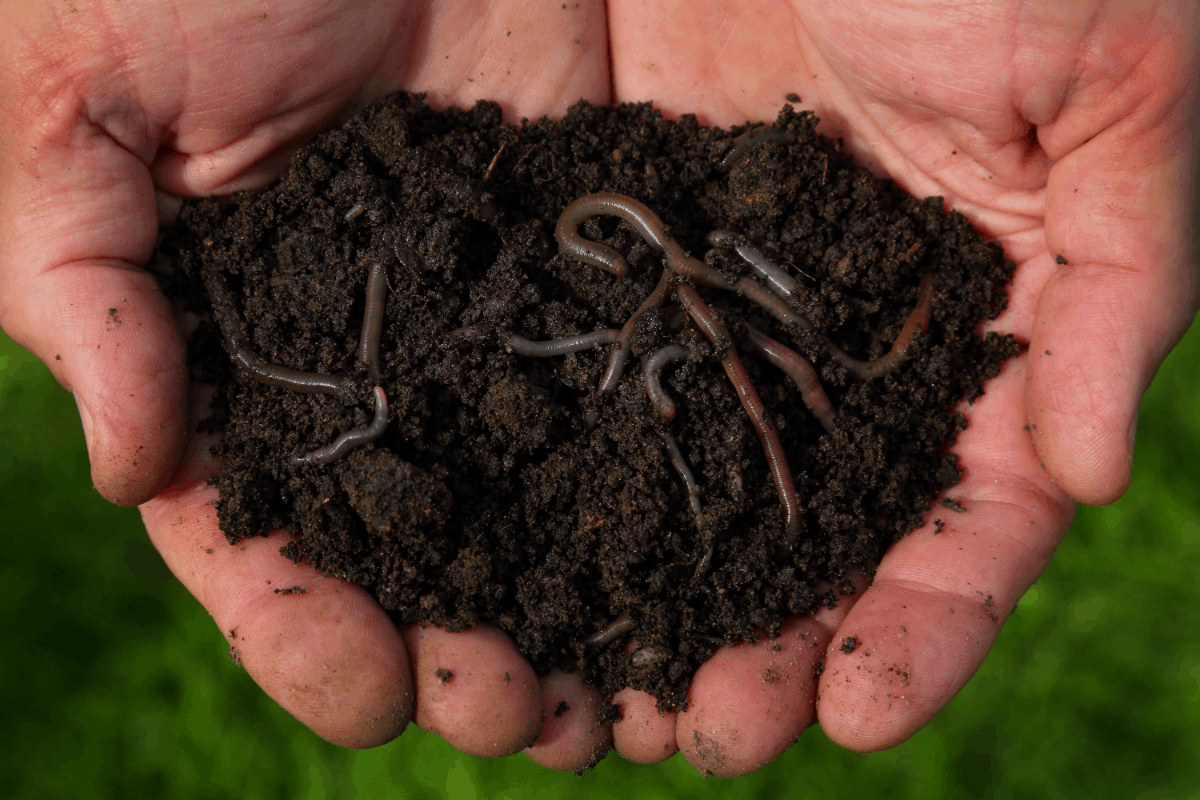 Organic Solution Premium Worm Castings Natural Nutrients for Plants
