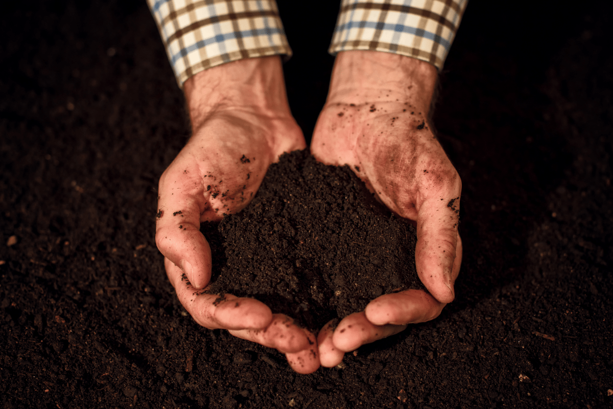 the best root organics soil review