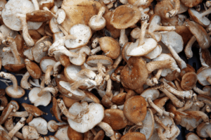 Plants that don't Like Mushroom Compost