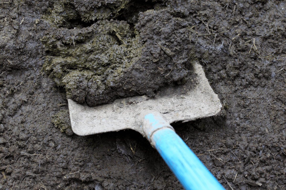 Easy Guide Composting Cow Manure