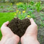 How to Add Compost to Existing Plant