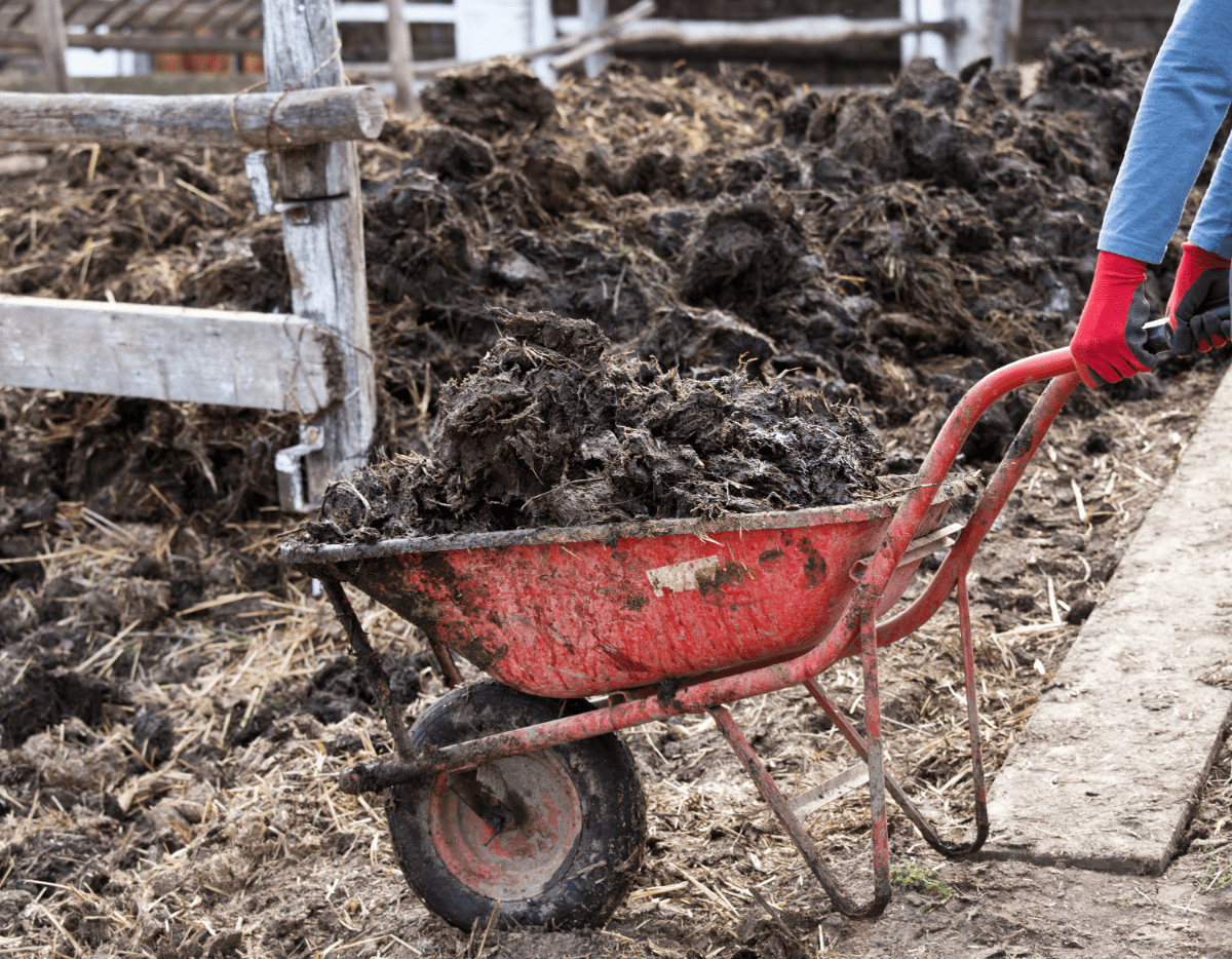 Mushroom Compost or Cow Manure: Which is Better for Your Soil?