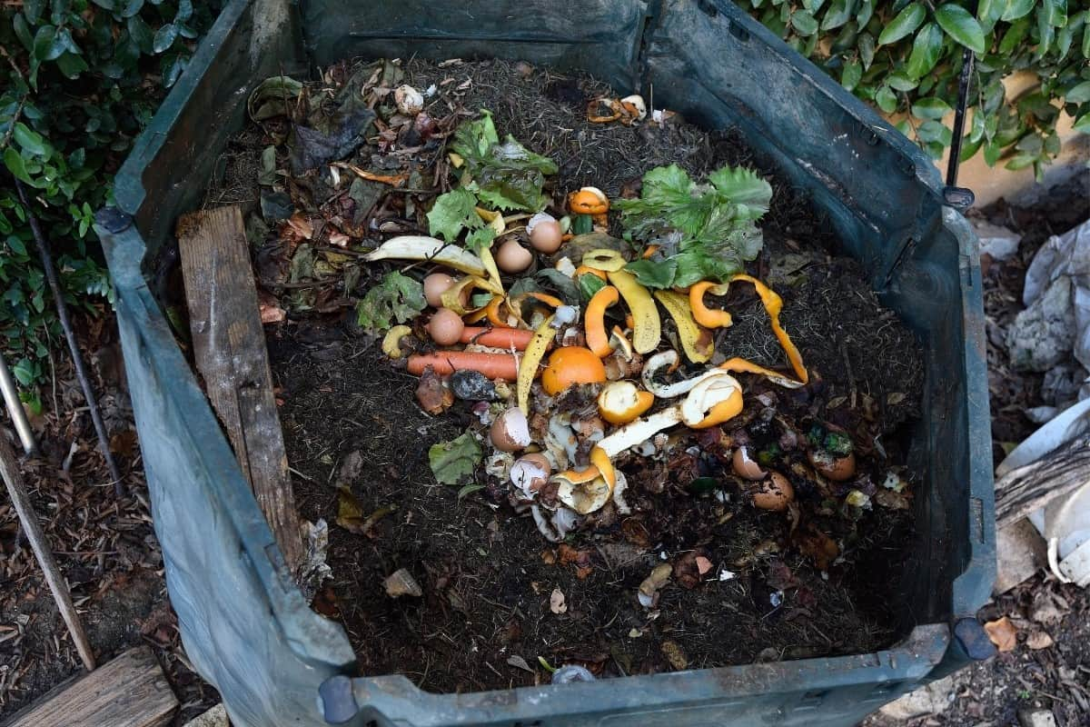 How To Make Homemade Compost Catalyst
