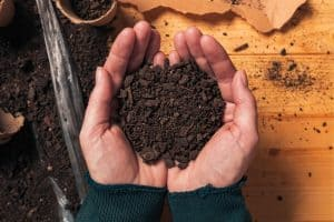 Top Soil Vs Compost- What's The Difference & What's Best To Use