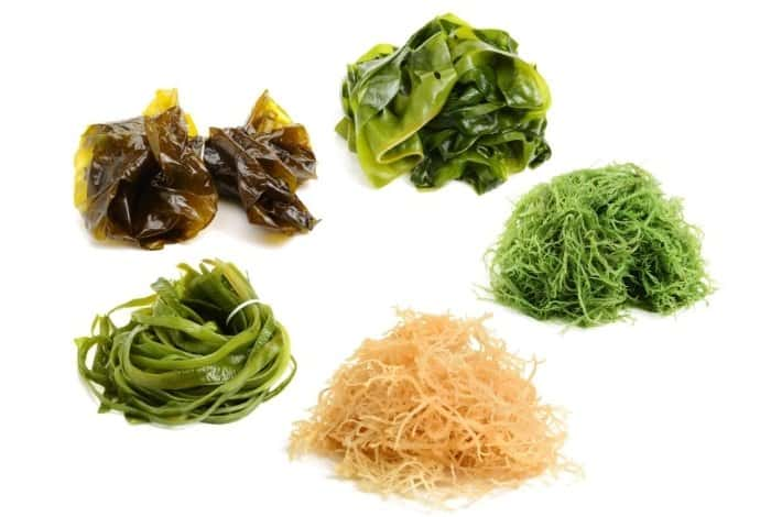 Seaweed vs Kelp- Is There Any Difference