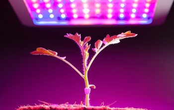 A List Of Quality But Cheapest LED Grow Lights Online