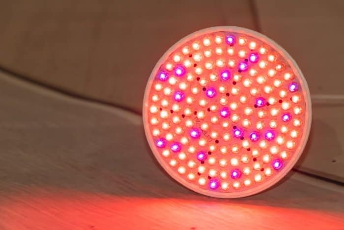 Key things to Know before Buying the Cheapest LED Grow Lights Online