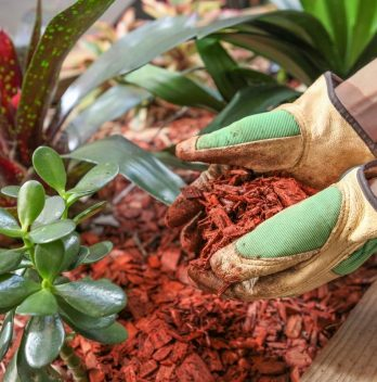 What are the Cedar Mulch Pros and cons?