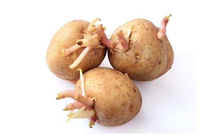A Bonus Tip- Sprouting Potatoes
