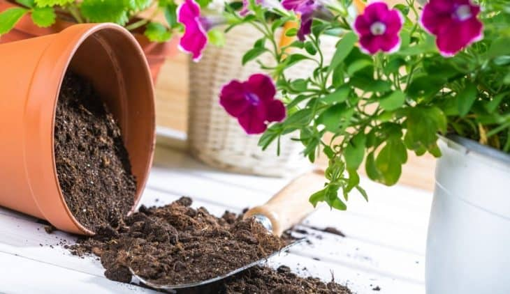 A Step By Step Guide On How To Sterilize Potting Soil