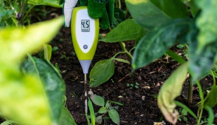 Best Soil Moisture Meter in the Market Today
