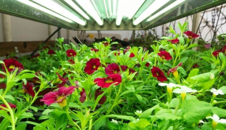 T5 Grow Lights – A Guide And Recommended Products