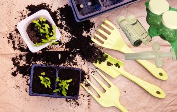 The Best Soil Test Kit – Foundation For Healthy Plants