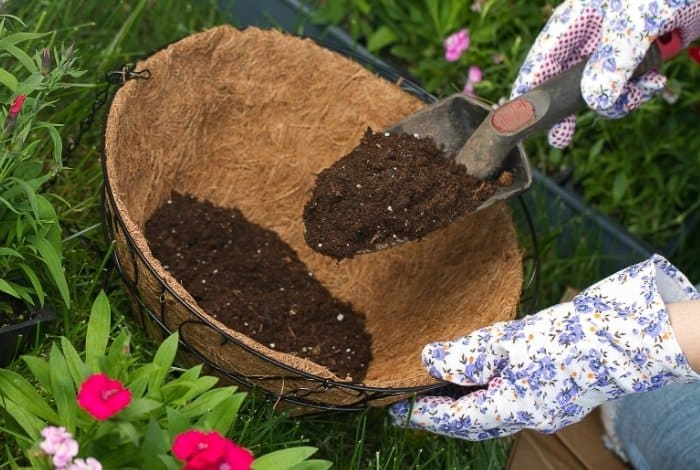 Why Should You Sterilize Potting Soil