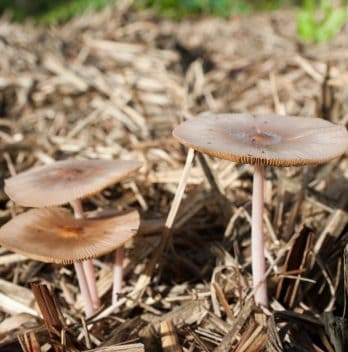 How to Make Mushroom Compost