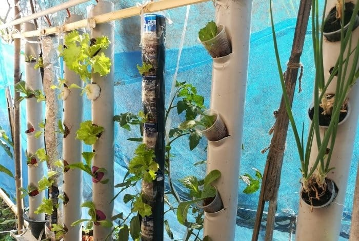 What is Vertical Hydroponics Farming
