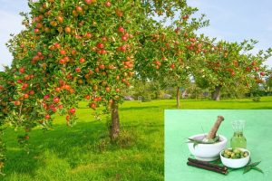 When To Spray Neem Oil On Fruit Trees
