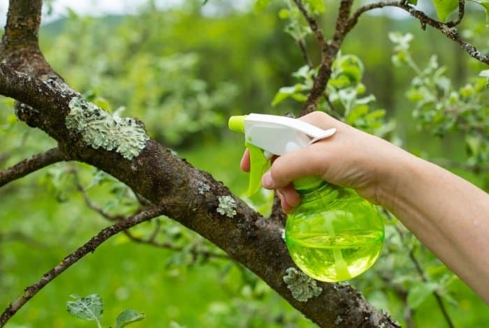 When is the Best Time to Spray Neem Oil on Fruit Trees
