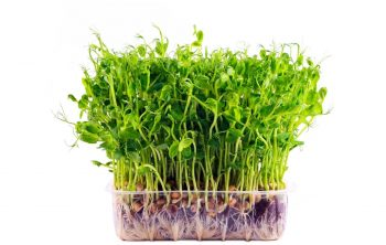 Growing Micro-greens Hydroponically