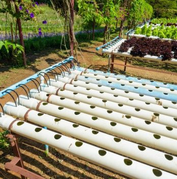 Hydroponic Drip System Watering Schedule