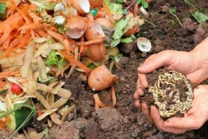 Maggots In Compost Good Or Bad
