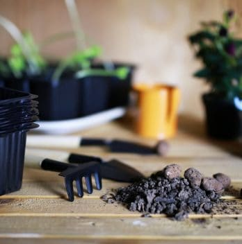 Can You Transplant Hydroponic Plants to Soil