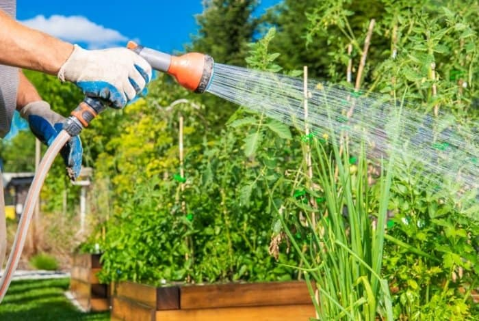 Get to Know How often You Should Water Your Vegetable Garden