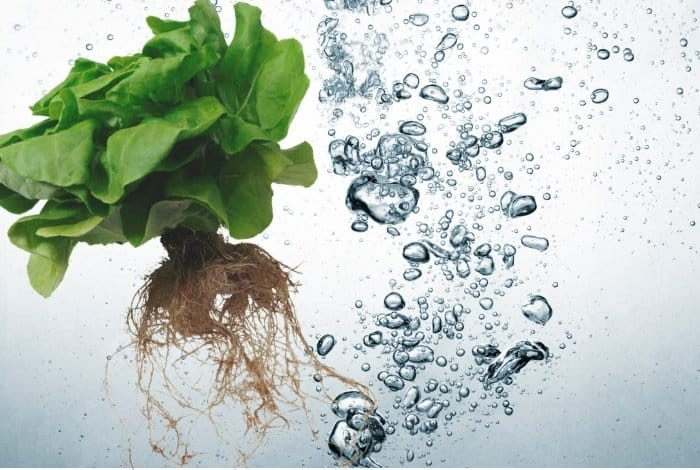 Is Super Oxygenated Water Good for Plants