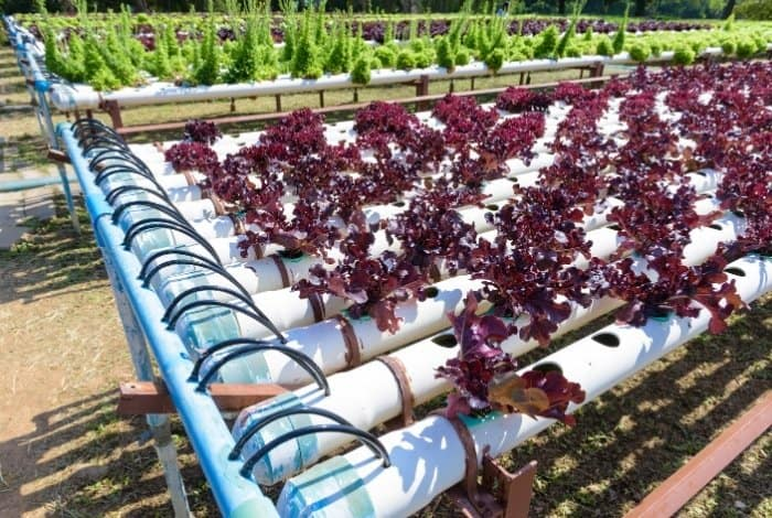 What is a Drip System for Hydroponics