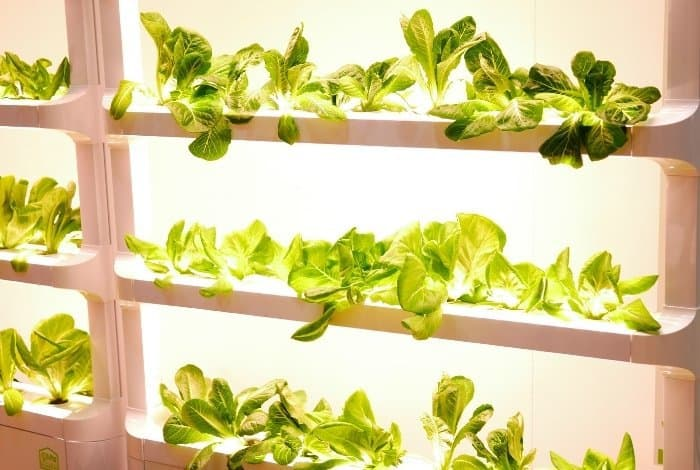 Characteristics To Consider When Choosing Plants For NFT