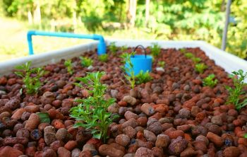How Much Is A Hydroponic System