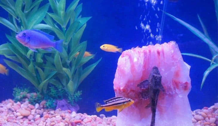 How To Raise Catfish In A Tank