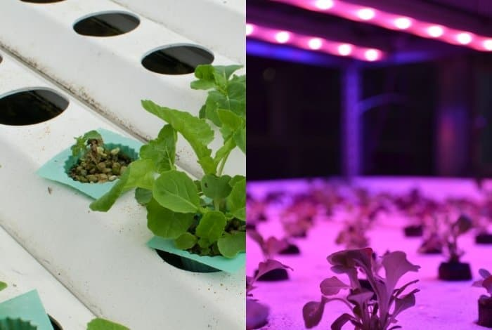 Other Cost To Consider - Hydroponic System
