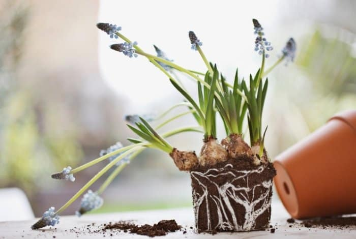 Remove Plants From Soil