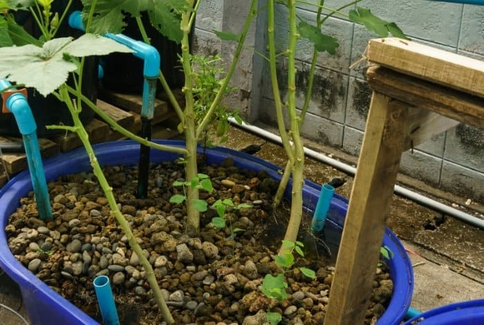 Types of Aquaponics Filtrating System - Swirl Filters