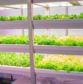 Are White LED Lights Good For Growing