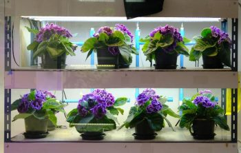 Does Artificial Light Help Plants