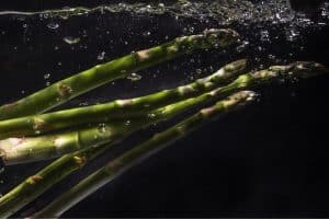 Growing Asparagus Hydroponically