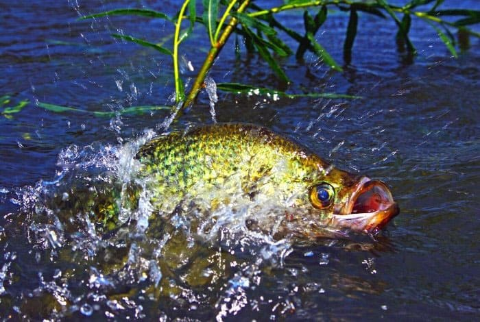 Guidelines To Raising Crappie In Tanks