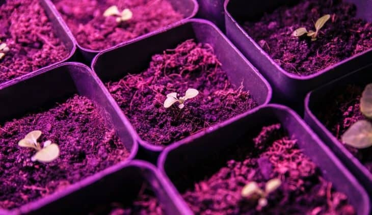 How Far Should Seedlings Be From Grow Light