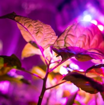 How Many Watts Per Plant For Led Grow Lights