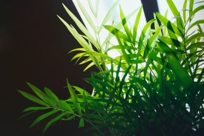 Types Of Artificial Lighting For Plants - Fluorescent Light