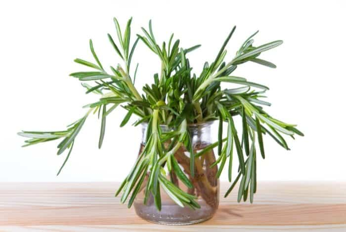 What Is Rooting Hormone