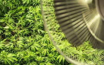 How To Keep Grow Tent Cool