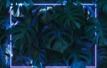 Black Light For Plant Growth