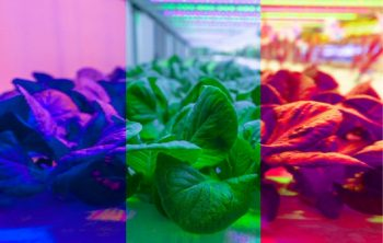 Plant Growth Under Different Colors Of Light