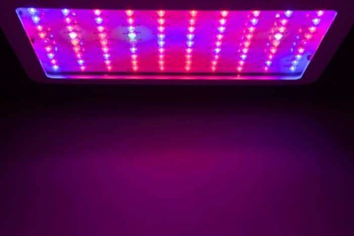 Platinum Led Grow Lights Pros and Cons
