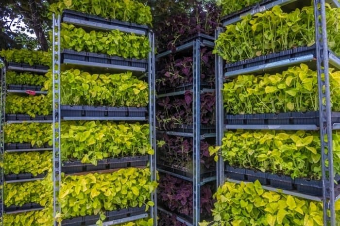 What Is Vertical Farming System