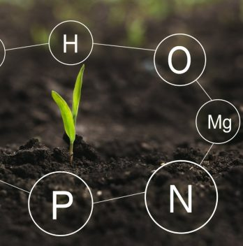 Where To Buy Hydroponics Nutrient Solution