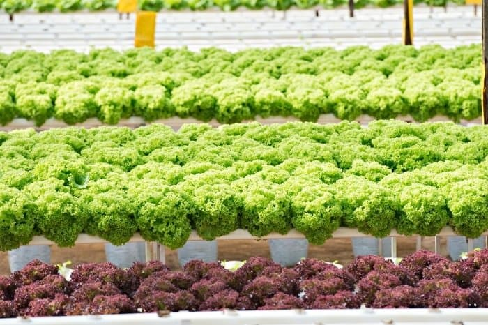 10 Easiest Plants To Grow Hydroponically